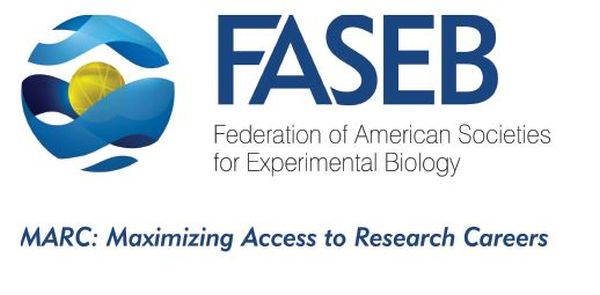 FASEB Fifth Annual BioArt Competition