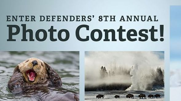 Defenders of Wildlife's 8th Annual Photo Contest